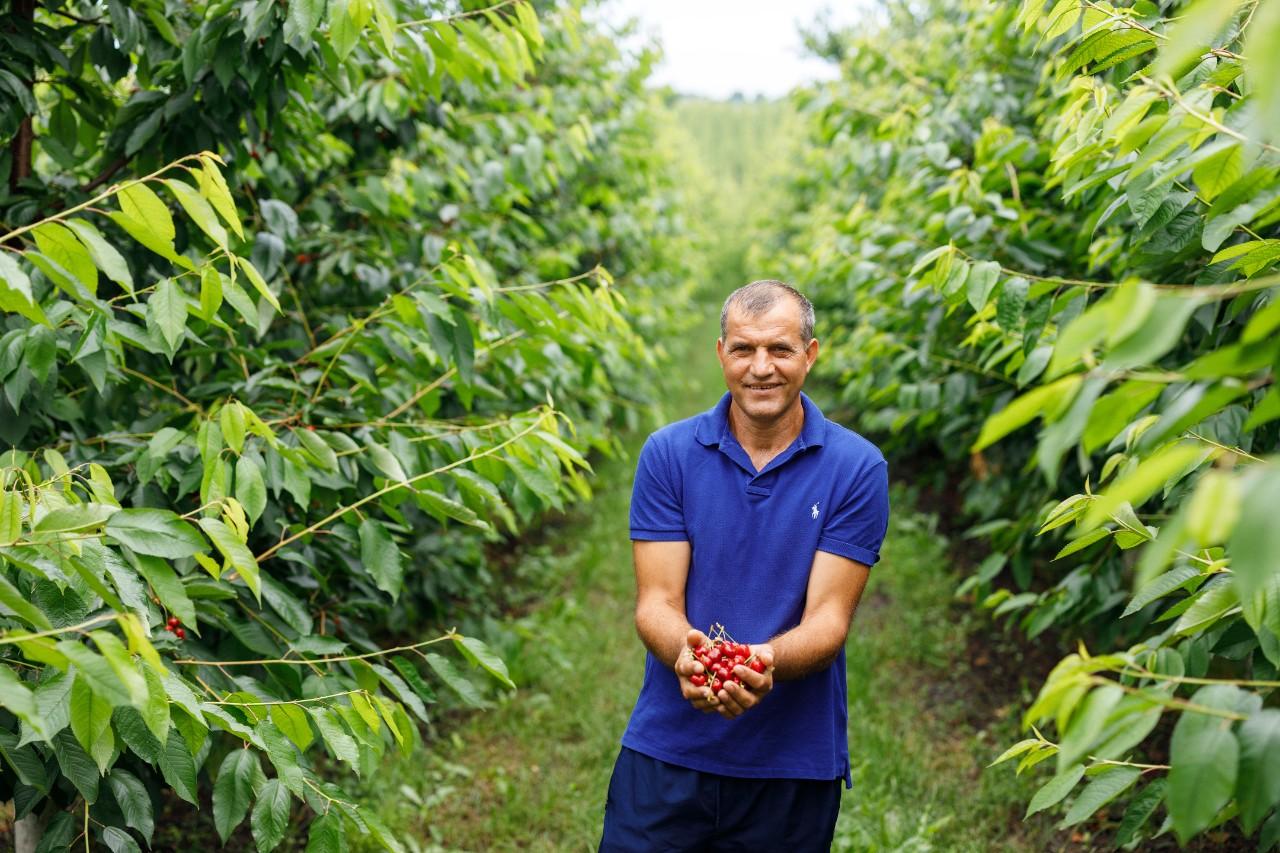 Innovation tastes like cherries in Hincesti